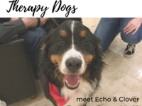 Reading Day Relief: Therapy Dogs