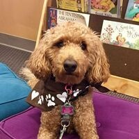 "Pet Partners ""Read with Me"" @ Your Library"