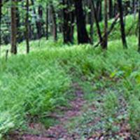 Friends Of Beltzville State Park - Walking Group