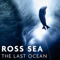 New Exhibit!  Ross Sea: The Last Ocean