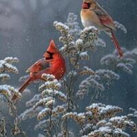 Winter Wildlife Watch