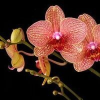 Orchid Care 101 Workshop