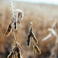 Soybean School - Salina