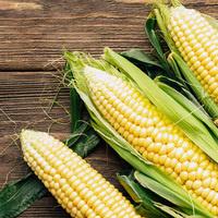 Corn School - Wichita