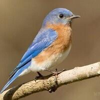 Jacobsburg Annual Winter Bird Count
