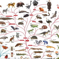 Why Are There So Many Different Forms Of Life?