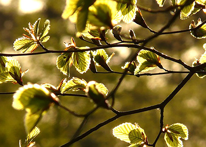 Mar 20, 2020: Vernal Equinox Walk: Searching for Spring at Brian C. Nevin Welcome Center
