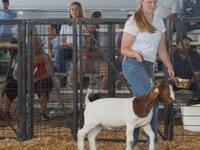 Pee Dee Region 4-H Livestock Clinic - REGISTRATION