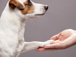 Pet Loss Support Group at Baltimore Humane Society