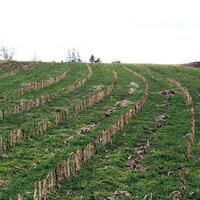 Using Cover Crops for Weed Suppression