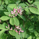 A Naturalist's Guide for Controlling Invasive Plants