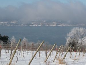 Winter Treasures of Cayuga East Full-Day Wine Tour