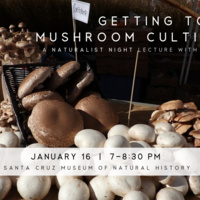 Naturalist Night: Getting to Know Mushroom Cultivation