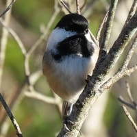 Great Backyard Bird Count - Bird Walk