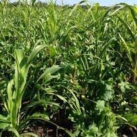 Crop Nutrient Management Update