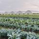 Organic Crops Field Tour