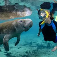 Swim with Manatees: Registration Deadline