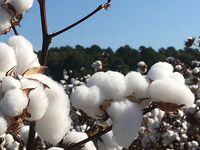 S.C. Cotton Growers' Annual Meeting