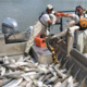 What Can We Do About Asian Carp?