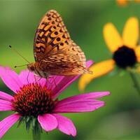 Making the Most of Your Piece of Nature-DIY Pollinator Workshop
