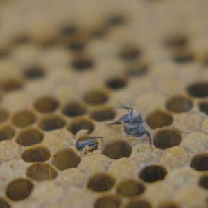 Alternative Cinema: Swarm Season