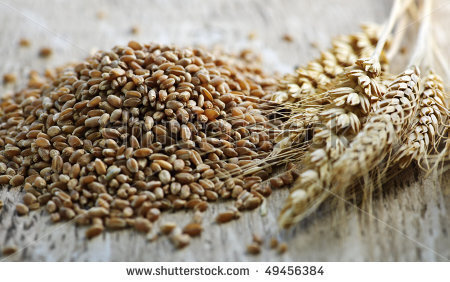 Emerging Opportunities for  Organic Grain Production and Marketing in South Carolina