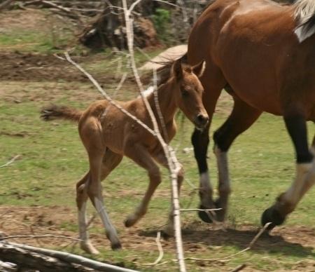 Spring Fling Horse Show