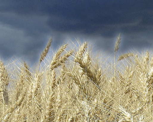 Climate, Weather, Data: Protecting Our Crops and Landscapes