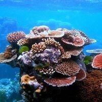 Exploring invasive species on Indonesian coral reefs