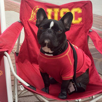 Pause for Paws - Visiting Therapy Dogs - USC Event Calendar