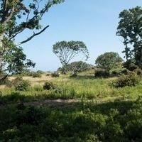 Menemsha Hills Beach & Trail Clean Up
