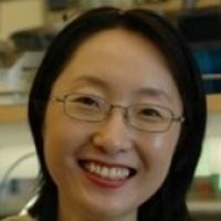 "USC Stem Cell Seminar: Juhee Jeong, New York University—""Regulation of craniofacial development by LIM homeodomain transcription factors"""