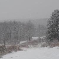 Winter Survival Science
