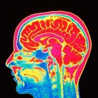 Diagnosed with anxiety or trauma disorder? Participate in a brain imaging study