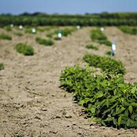 Crop and Soil Management Workshop