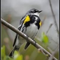 Saturday Morning Birding Series