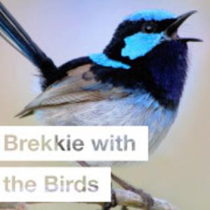 Brekkie with the Birds