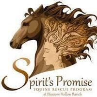 Spirits Promise Equine Rescue Program at Blossom Hollow Ranch