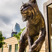 Athletics Department - Charlotte Campus