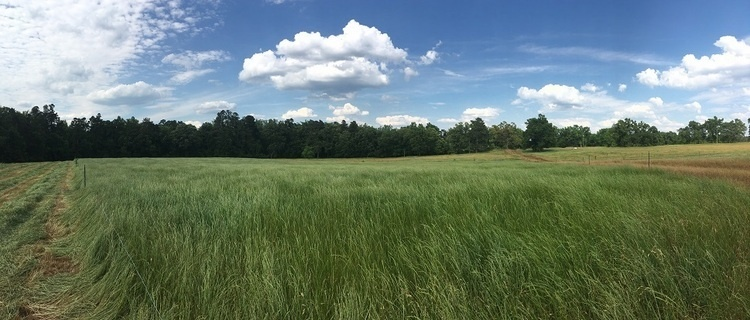 Edisto Hay and Forage Field Day