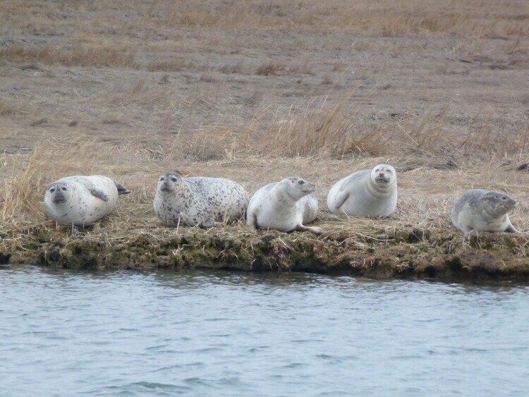 Seal Watching/Wildlife Tours from the Water