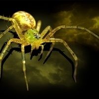 Spiders: Fear & Fascination