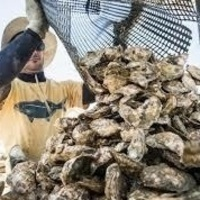 Oyster & Aquaculture Tours