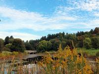 Arboretum Tours- Cornell Botanic Gardens