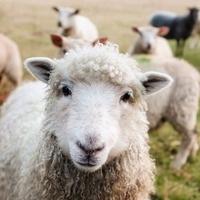 Sustainably Feeding Animals