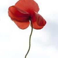 Exhibition: Poppies: Women, War, Peace
