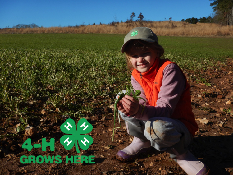4-H Wildlife Food Plot Project - REGISTRATION