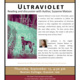 Dean's Colloquium with Novelist and Professor, Suzanne Matson, Reading from Ultraviolet