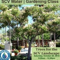 Trees for the SCV