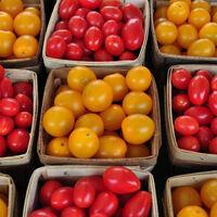 Tomatoes: Variety Tasting & Preserving the Harvest